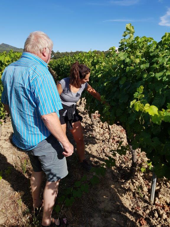 In the vineyard with Clair Burle