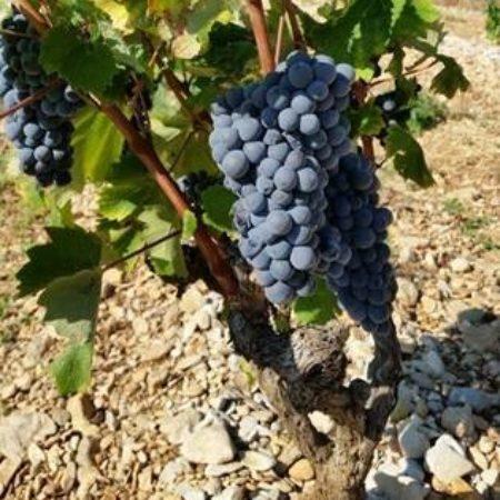 Onze rode wijnen